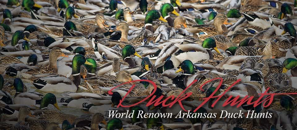 Duck Hunts Stuttgart Arkansas