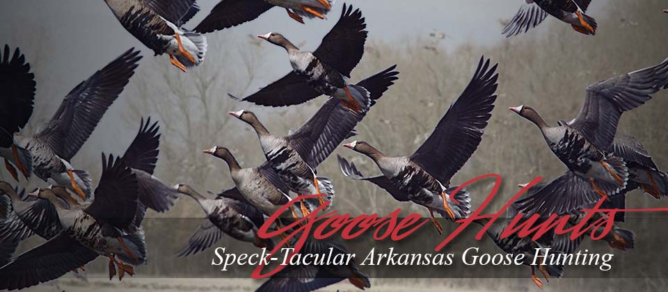 Goose Hunts Stuttgart Arkansas